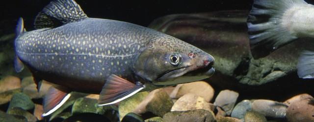 fish-387160_1280